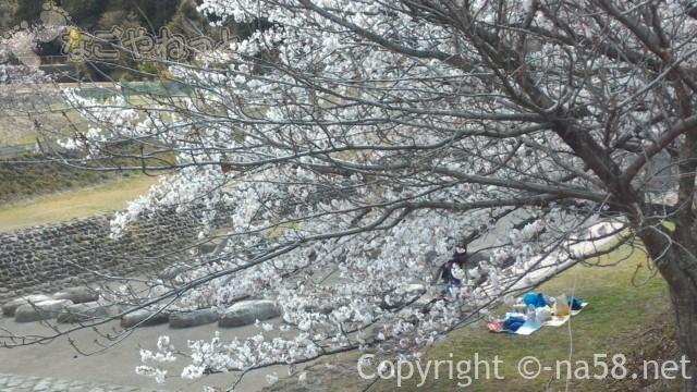 羽根谷だんだん公園(岐阜県海津市南濃町奥条)でお花見