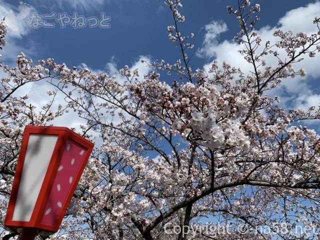 羽根谷だんだん公園(岐阜県海津市南濃町奥条)の花見提灯