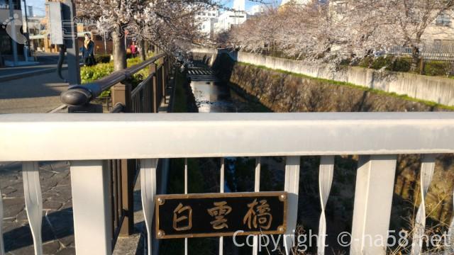 山崎川桜花見、桜並木の上流にあたる「白雲橋」からの風景