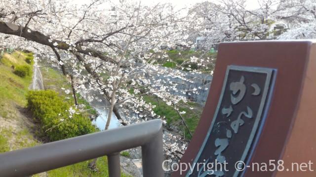 山崎川の桜花見ライトアップの場所、かなえこはし