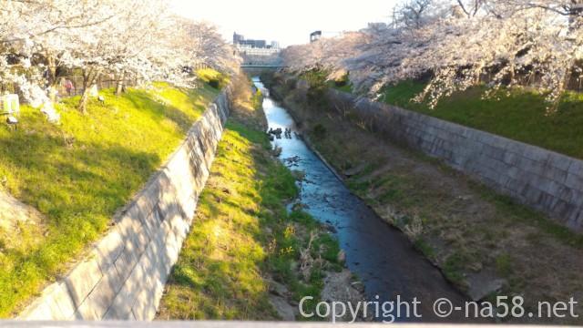 山崎川桜花見、橋から川岸の桜並木が美しい