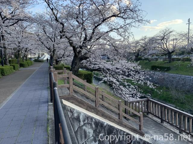 山崎川桜花見、散策路から山崎川へ降りる階段が何か所かある