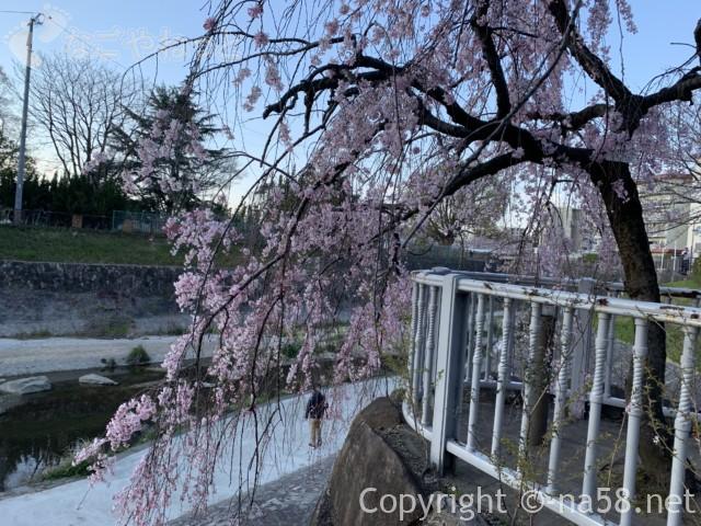 山崎川親水公園、しだれ桜と親水公園