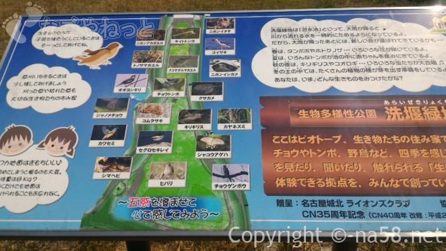洗堰緑地(生物多様性公園)生き物の宝庫