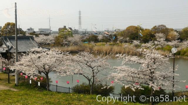 蛇池公園(名古屋市北区西区)満開の桜