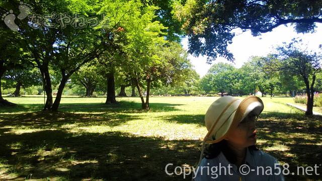 庄内緑地公園(名古屋市西区)の木漏れ日