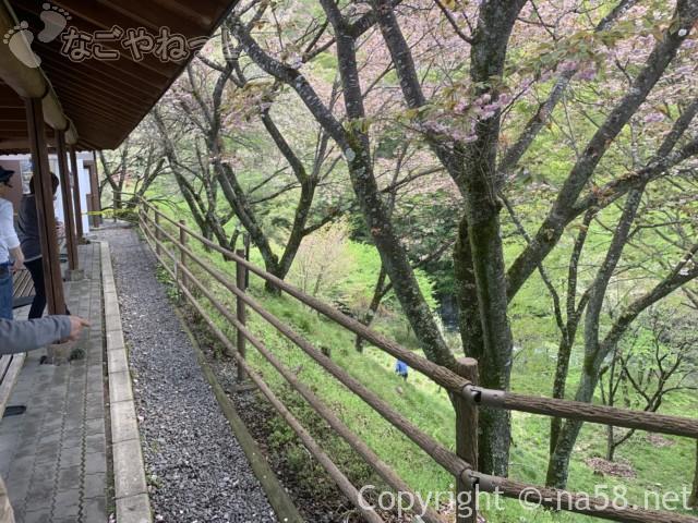 道の駅「明宝」(岐阜県郡上市)の渡り廊下と磨墨の里公園方面の八重桜