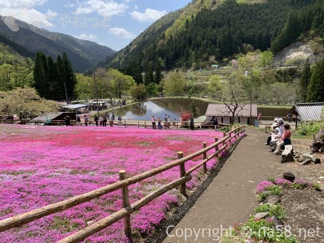 國田家の芝桜(岐阜県郡上市)、満開の光景