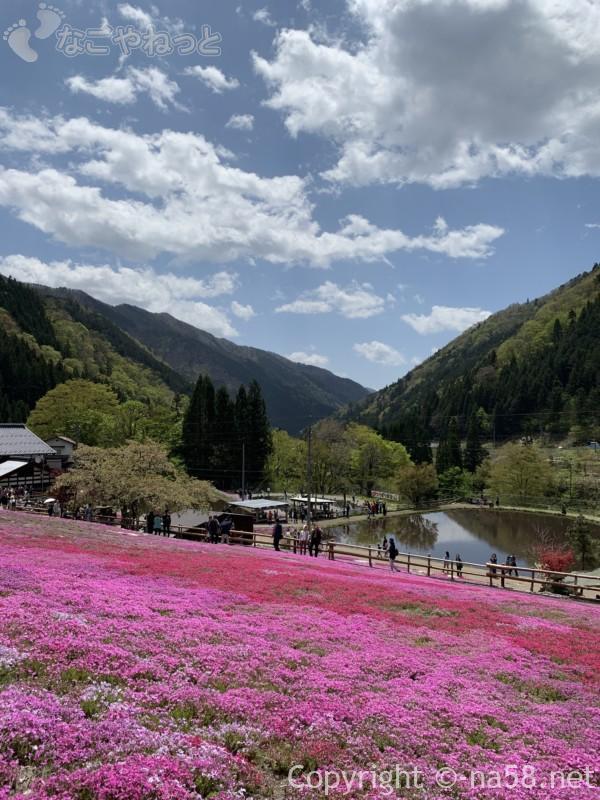 國田家の芝桜(岐阜県郡上市)上の道から見下ろす光景池もある