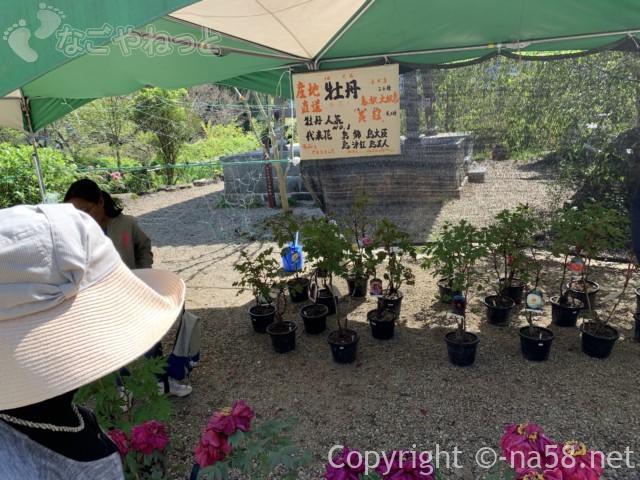 ぼたん園(桂昌寺) 見頃!(岐阜県郡上市)ぼたんの鉢植えを買えます