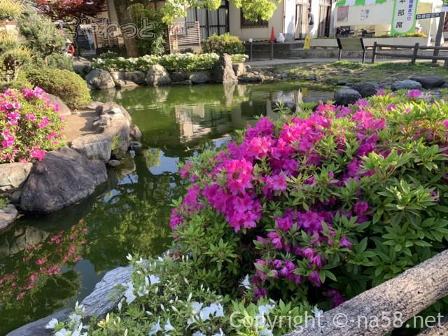 江南藤まつり・庭園に咲くつつじも美しい