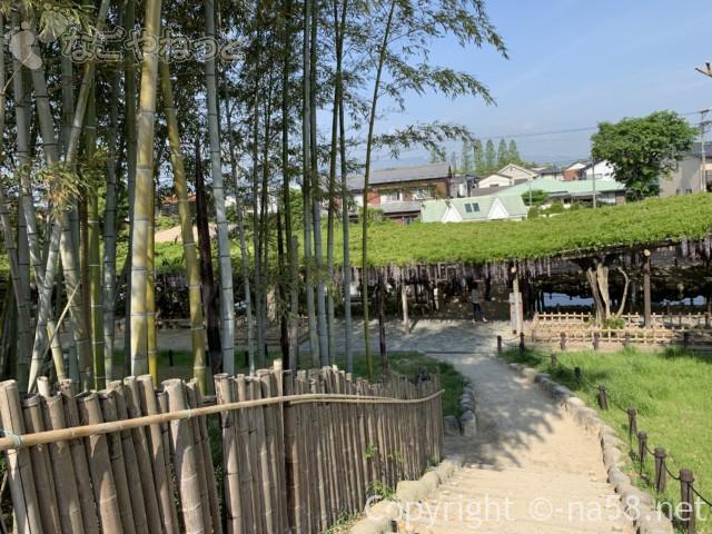 尾張津島藤まつり、美しく咲く藤棚の藤(愛知県津島市)藤棚と景観を見られる展望台から
