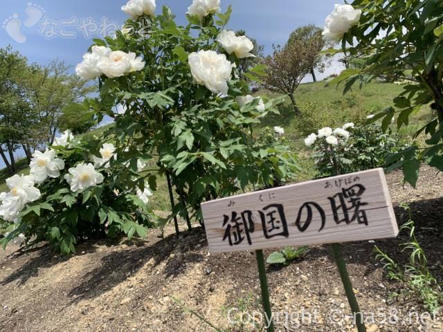 いなべぼたんまつり(三重県いなべ市)農業公園にて、御国の曙
