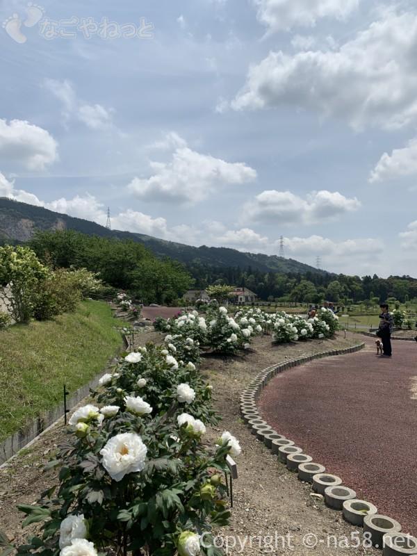 いなべぼたんまつり(三重県いなべ市)ボタン園