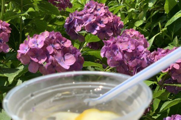 下田公園(静岡県下田市)あじさい園でレモンスカッシュとあじさい