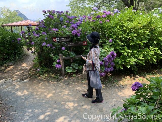 下田公園(静岡県下田市)あじさい園、散策路にて