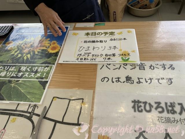 「観光農園花ひろば」(愛知県南知多町)摘み取りOKの花について