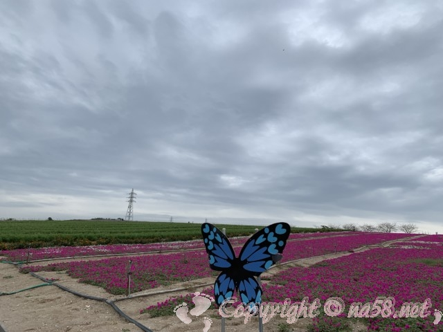 「観光農園花ひろば」(愛知県南知多町)の撮影スポットの青い蝶