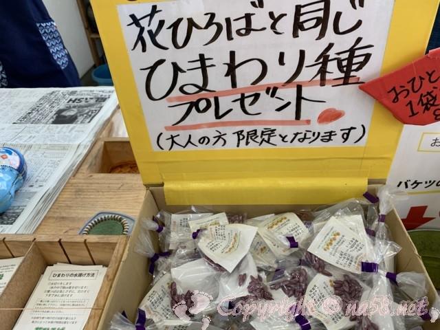 「観光農園花ひろば」(愛知県南知多町)ひまわりの種とみずあげ方法