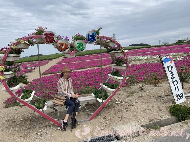 「観光農園花ひろば」(愛知県南知多町)の撮影スポット、ハートの花壇で
