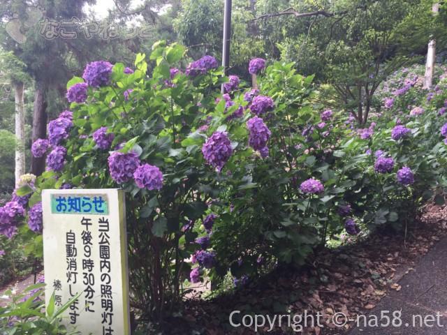 秋葉公園(静岡県牧之原市)のあじさい、午後9時半までライトがつく