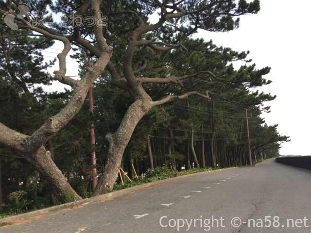 御浜岬(静岡県沼津市)の無料駐車場、松林