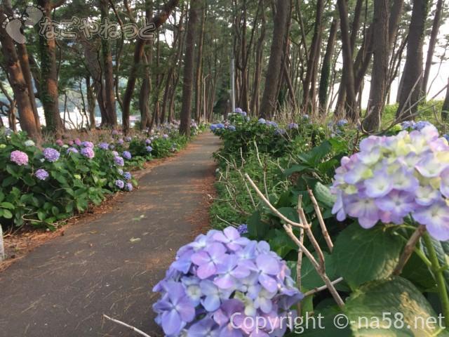 御浜岬公園(静岡県沼津市)のあじさい