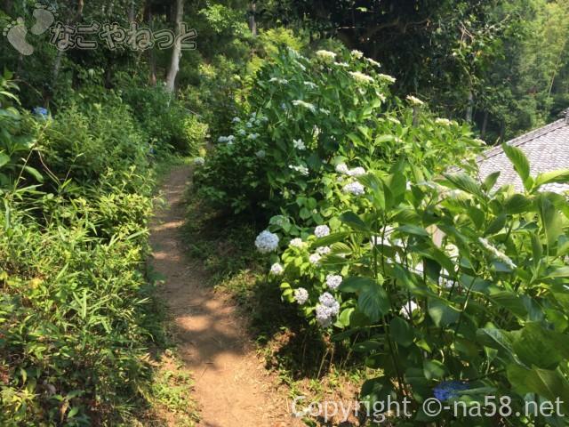 実谷山極楽寺(静岡県森町)のあじさい裏山
