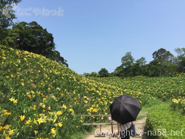 可睡ゆりの園(静岡県袋井市)の黄色いゆりのじゅうたん