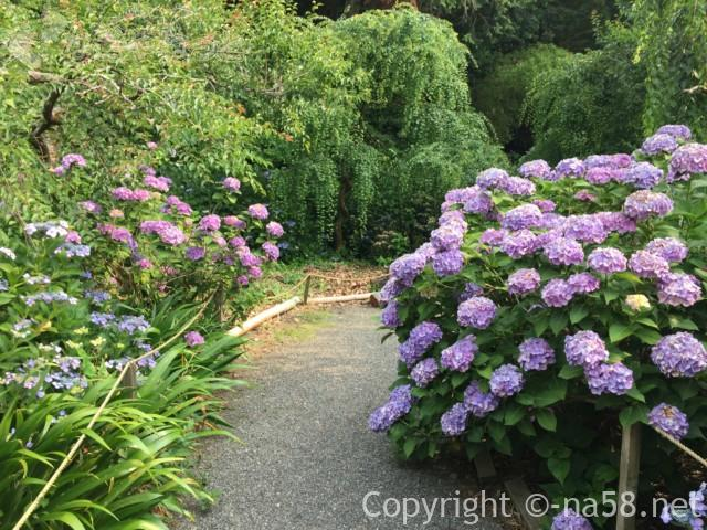 龍尾神社(静岡県掛川市)の花庭園内のあじさいと遊歩道
