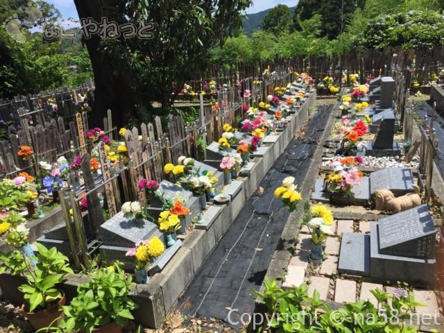 「ペット寺」として有名な太江寺、三重県伊勢市、ペットのお墓