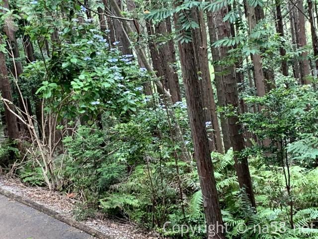 風土の森(静岡県河津市)にあるあじさい