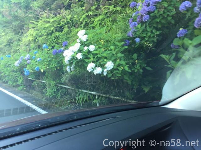 「武士谷 夢・花街道」のあじさい、車窓から(三重県大紀町)