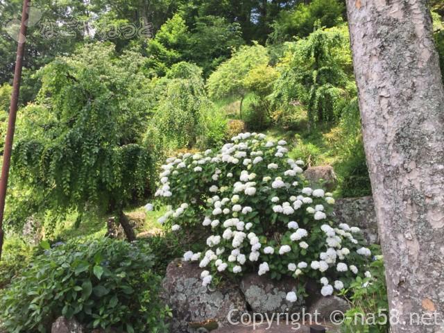 「木の館豊寿庵」(三重県伊賀市)のあじさい、傾斜のある庭に