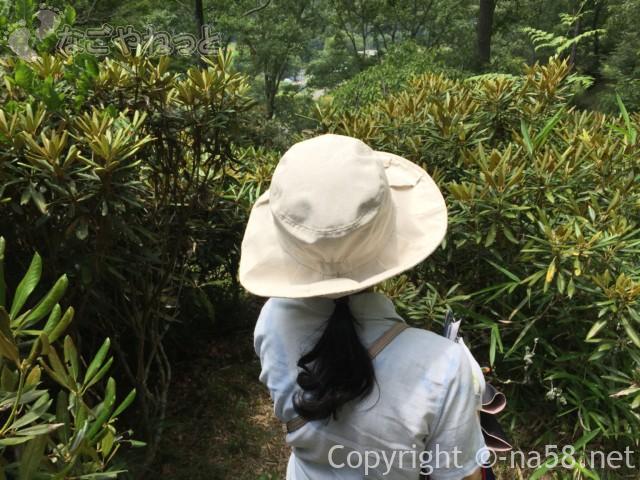 「木の館豊寿庵」(三重県伊賀市)庭園内日本シャクナゲの木