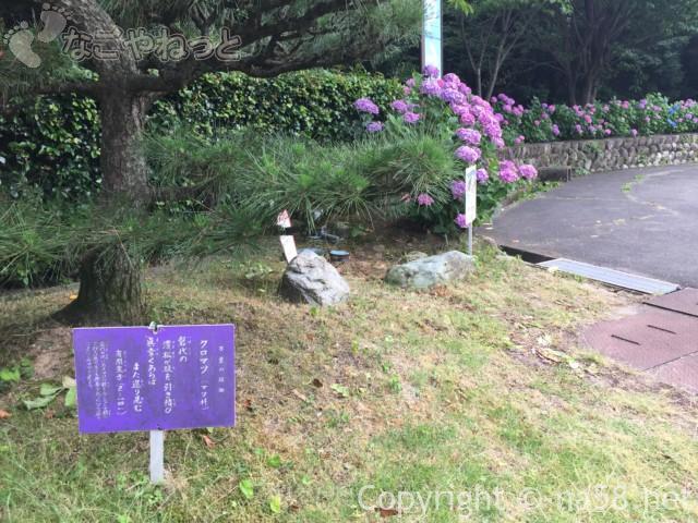 「万葉の里公園」(三重県いなべ市)万葉集の原歌が立札に、あじさいと