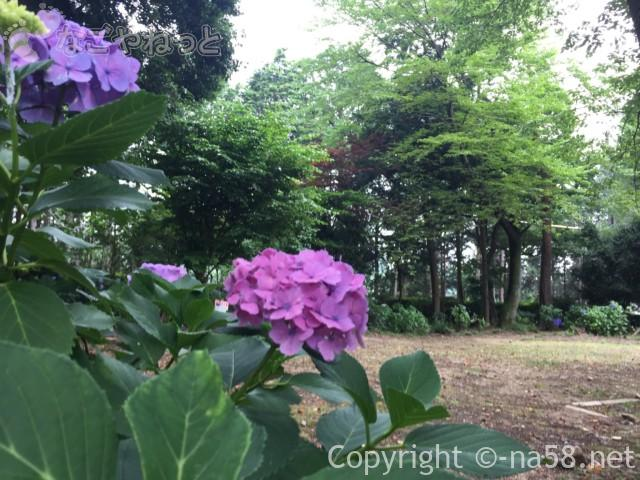 「万葉の里公園」(三重県いなべ市)のあじさい