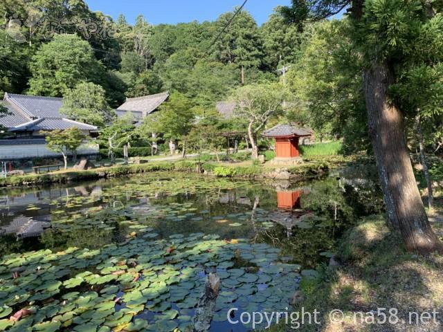 丹生大師の里、丹生神社(三重県多気町)の池と睡蓮