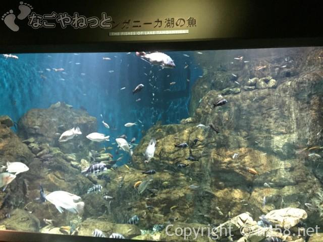「アクアトト岐阜」2階展示、タンガニーカ湖の生き物
