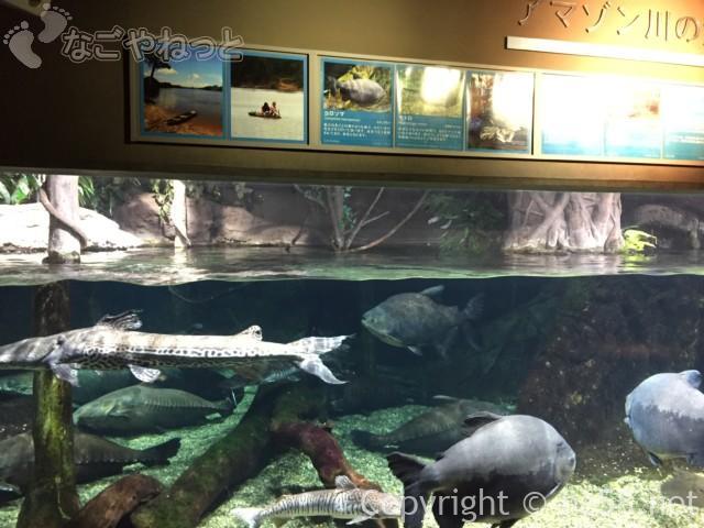 「アクアトト岐阜」1階展示アマゾン川の生物