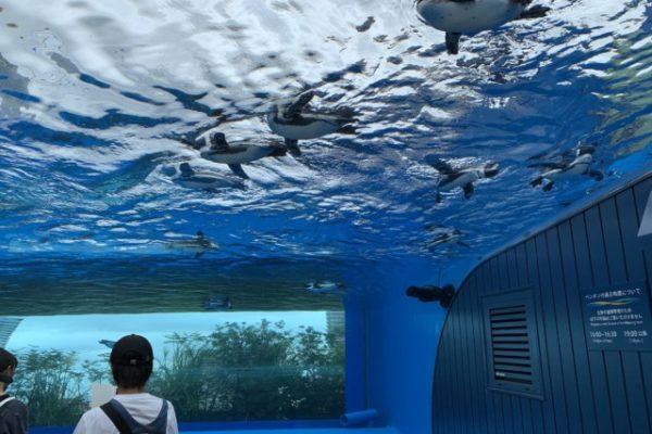 サンシャイン水族館・ビルの屋上で本当にペンギンが飛んでた!