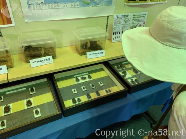 「水と緑の館(展望タワー)」木曽三川公園センター南ゾーン、昆虫展示
