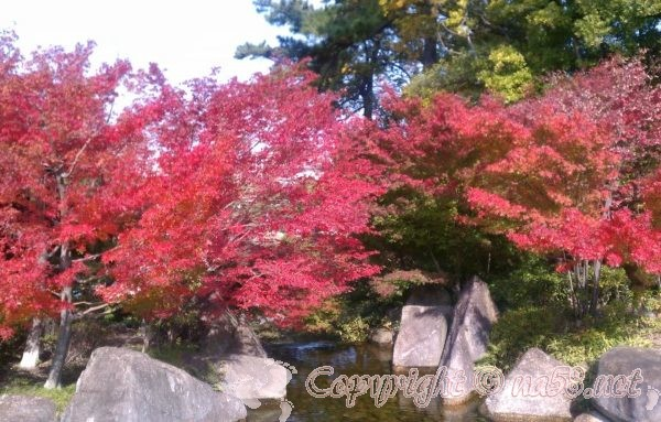 徳川園(日本庭園)の紅葉・見ごろと期間/無料公開日に秋のイベントを!(名古屋東区)