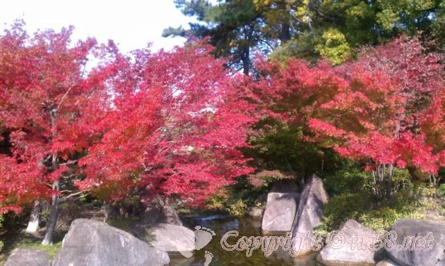 徳川園(日本庭園)(愛知県名古屋市東区)の紅葉