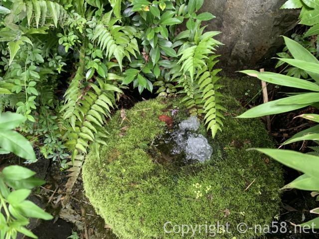 岐阜県大垣市「大手いこ井の泉(湧き水)」苔むした石の中央からの自噴