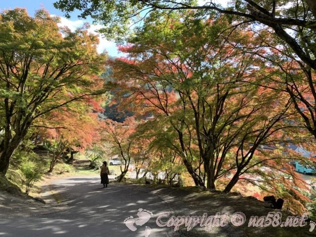 2019年11月13日、一の谷へおりる道の風景(愛知県豊田市香嵐渓)