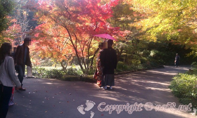 徳川園(日本庭園)愛知県名古屋市東区、紅葉とカップル