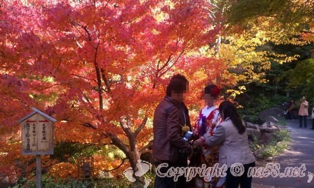 徳川園(日本庭園)愛知県名古屋市東区、紅葉と結婚前撮り撮影