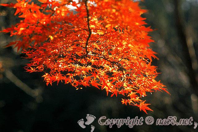 徳川園(日本庭園)愛知県名古屋市東区、紅葉
