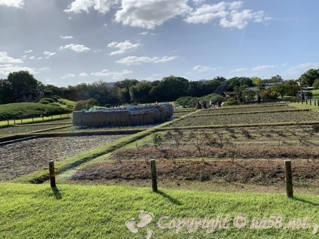 岡山後楽園(岡山県岡山市)の園内の風景、田、稲刈り後